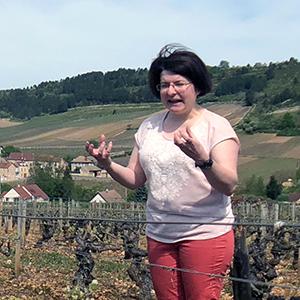 burgundy-prunier